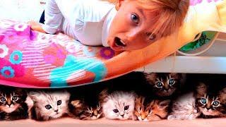 Что за котята у Кати? Мама помогает спасать пропавших котят // Мы семья Lost Kitties