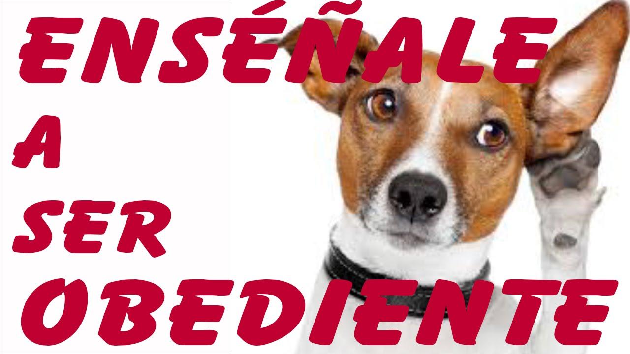 5 trucos para ense ar a un perro a ser obediente - Mascotas originales para tener en casa ...