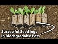 Grow Seedlings Successfully Using Cardboard Rolls
