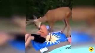короткие смешные ролики про животных short funny videos about animals