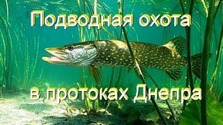 Подводная Охота в Протоках Днепра