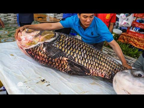 Xẻ Thịt Cá Hô Giá Gần 300 Triệu - 77Kg Tại Hải Sản Biển Đông - 13000$ - Giant Barb Fish Cutting