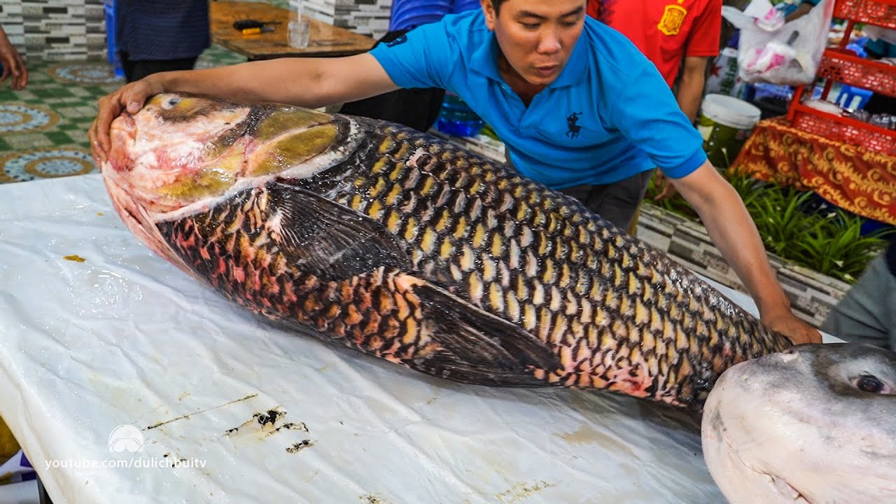 Download Xẻ Thịt Cá Hô Giá Gần 300 Triệu - 77Kg Tại Hải Sản Biển Đông - 13000$ - Giant Barb Fish Cutting