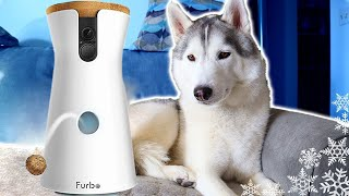 What Does my Husky Do When Home Alone? | Furbo Dog Camera Review