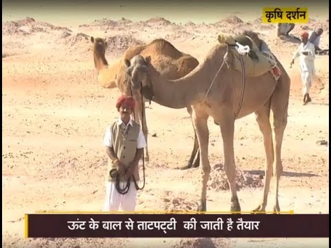 Krishi Darshan - Camel Farming special - Success story of Sumer Singh Bhati