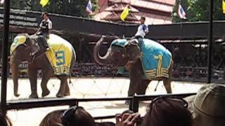 Шоу слонов в Таиланде.mp4
