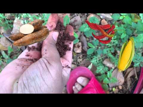Food and Agriculture: The tainos of the Dominican Republic