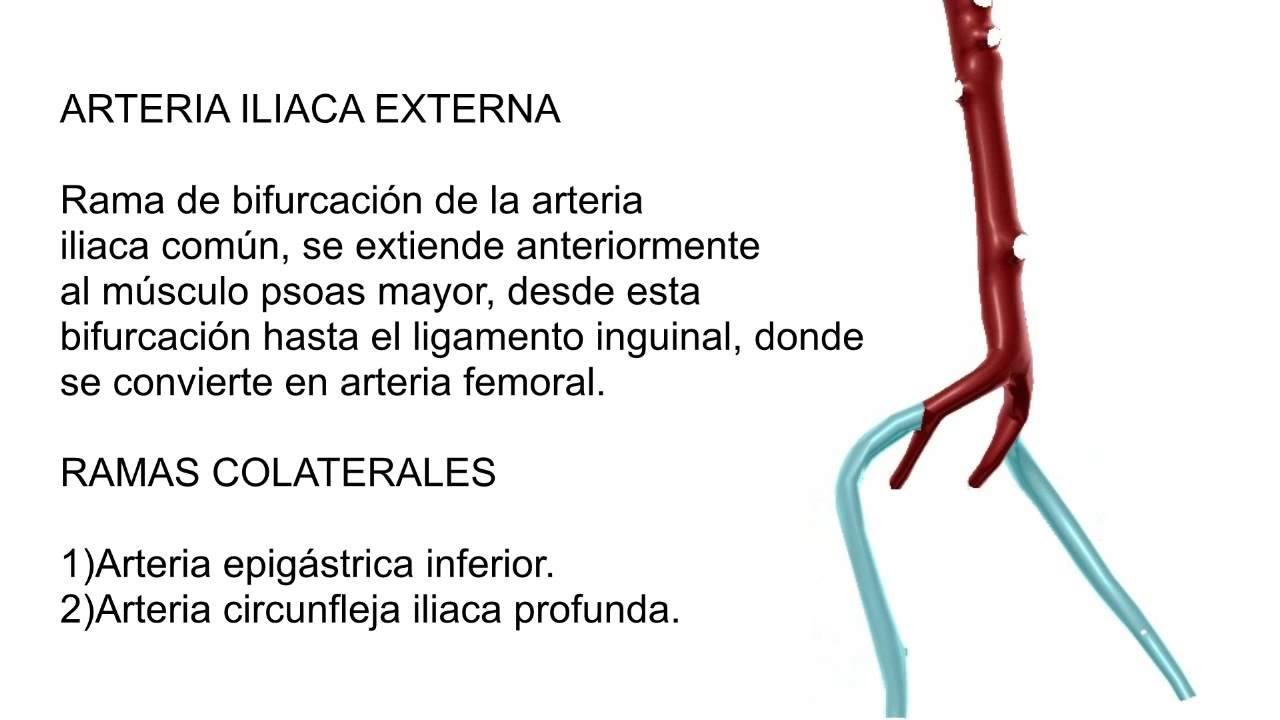 Arterias Iliacas Comunes - YouTube
