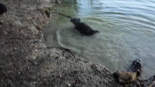 Water in Schinveld met Marley en Baukje