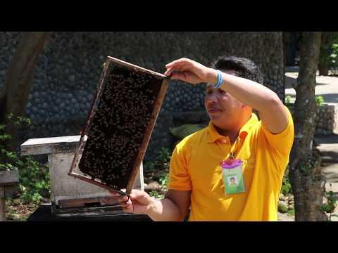 Bees Bohol Bee Farm 2017