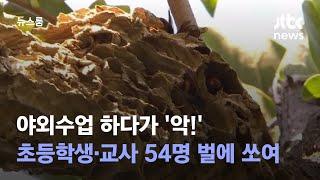 야외수업 하다가 '악!'…초등학생·교사 54명 벌에 쏘여 / JTBC 뉴스룸