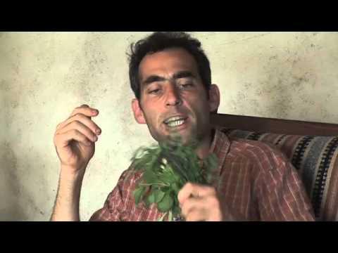 Herbal Energetics 2
