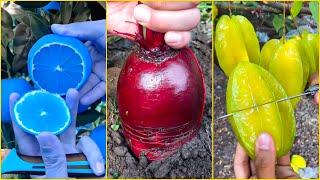 😍Farm Fresh Ninja Frขit   Tik Tok China   (Oddly Satisfying Fruit Ninja) #1