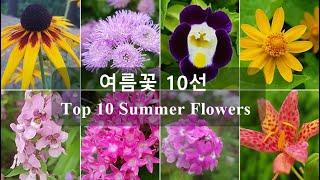 여름꽃 10선 Top 10 Summer Flowers