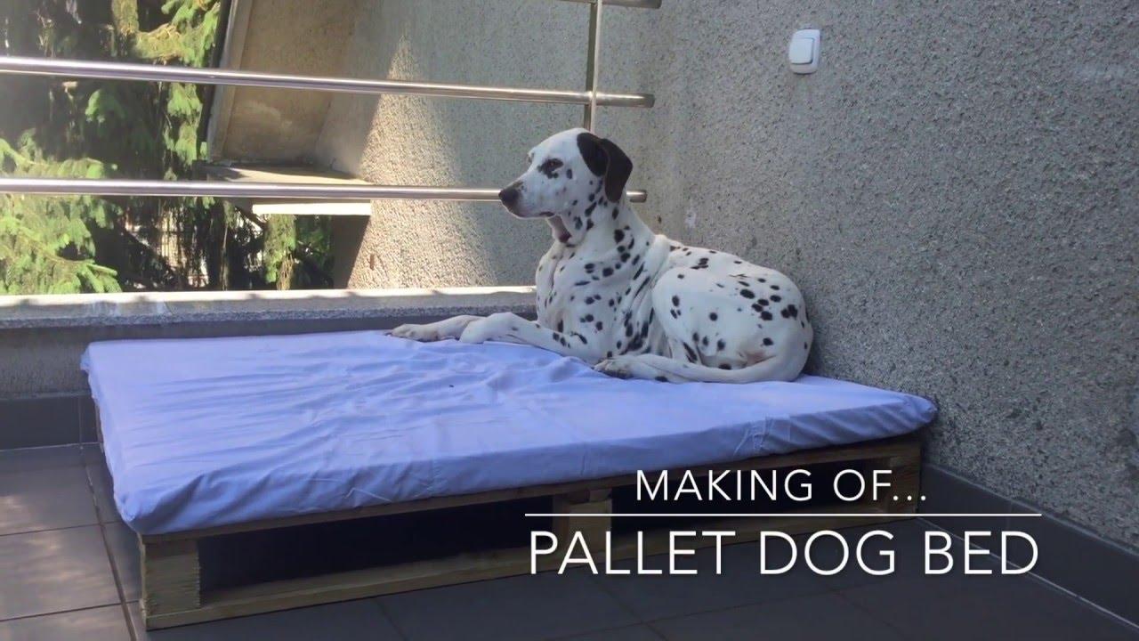 Dog Bed Youtube