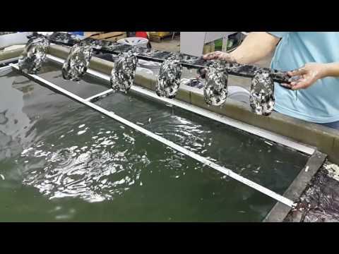 Water Transfer Printing Aikka Malaysia