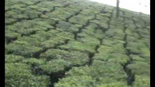 Harisson Tea plantation, Kalpetta
