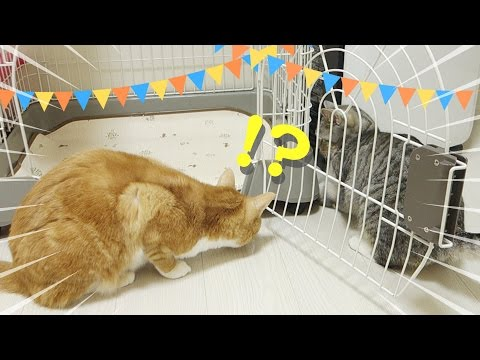 Thumbnail: funny cat find something behind cage / 【猫 かわいい】ケージ裏に何かを発見した猫