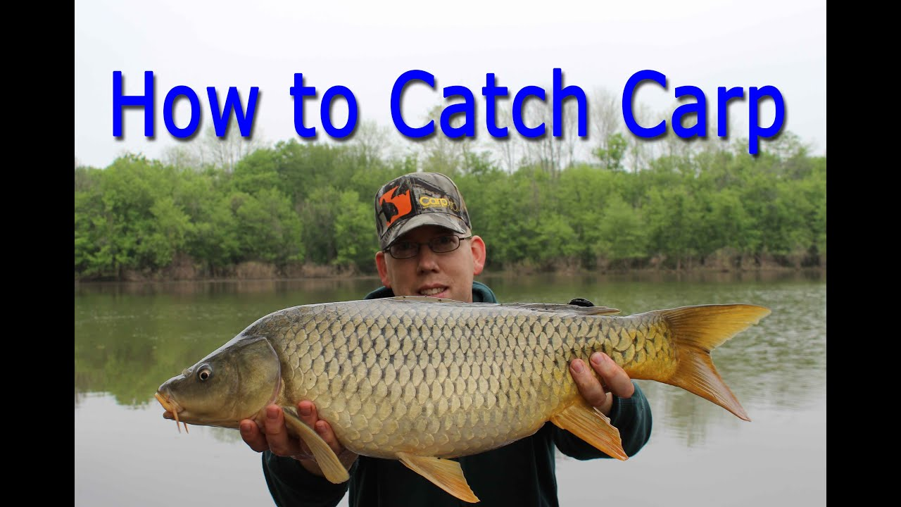 How to Catch Carp - for Beginners