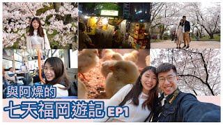 【日本福岡】櫻花盛開的季節!| 屋台初體驗|超多互動的小動物cafe|與阿燥的七天九州福岡遊EP1|Jessica Chu