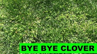 How to Kill Clover in your Lawn