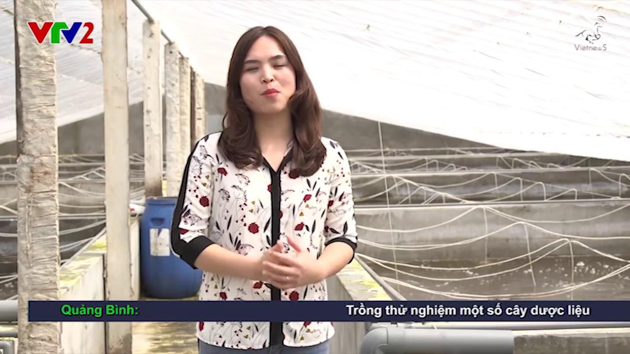 Mô hình Nuôi tôm bể Xi Măng đạt hiệu quả cao