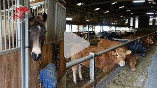 Reconversion de bâtiments d'élevages laitiers : témoignages