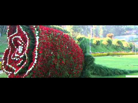 Plan Your Summer Holidays in Ooty with Travel Town