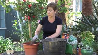 How To Plant A Standard Rose : Garden Space