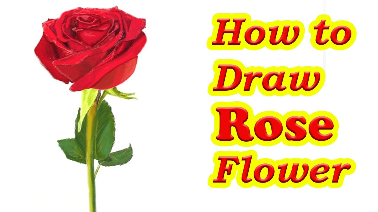 How To Draw A Rose Flower Step By Step  Easy Drawing Tutorial