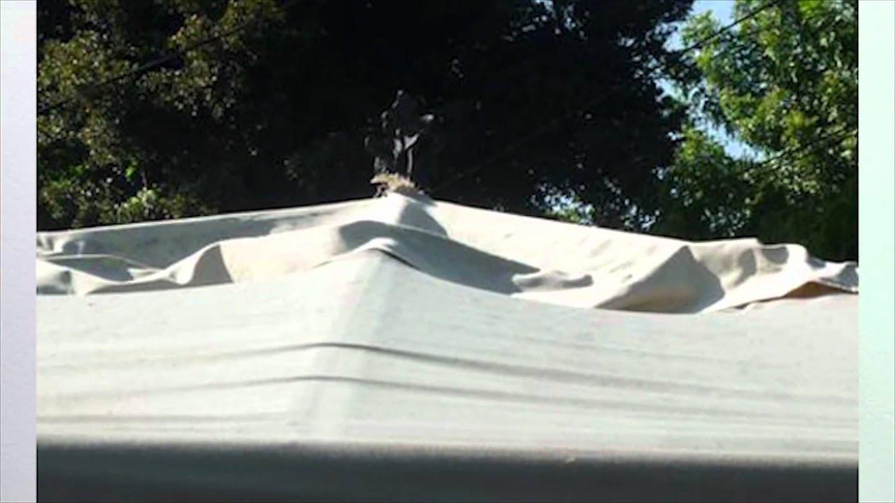 MWC5763LOY 10x Tanne klips f/ür Fronthaube Isolierung Zierleisten Platten