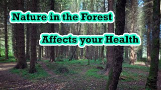 The Nature Of The Forest And Your Health, By Author:  Anna Maria Clement, Ph.D., L.N.
