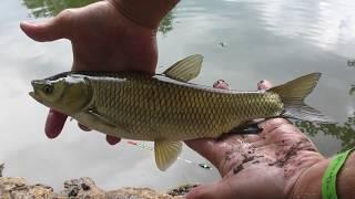 видео Ловля белого амура | ATMHunt.ru Вестник охотника и рыбака