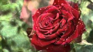 Jeanette MacDonald Sings - Only A Rose
