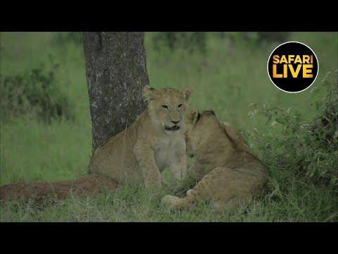 safariLIVE - Sunset Safari - January 18, 2019