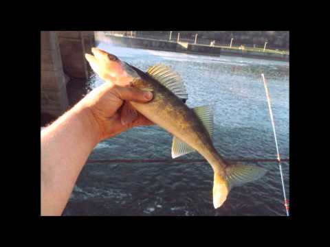 Monongahela River Fishing Trip