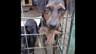 Приют для собак в Воронеже Дора