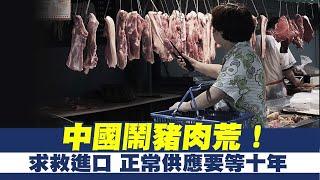 中國鬧豬肉荒!求救進口 正常供應要等十年|中共發動非傳統威脅 AIT:台灣不孤單!|晚間8點新聞【2019年11月7日】|新唐人亞太電視