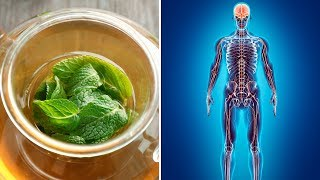 5 Powerful Health Benefits of Lemon Balm (Melissa Essential Oil)