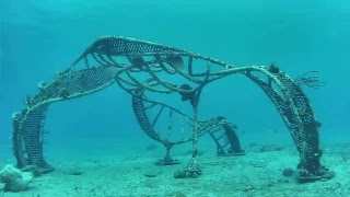 Living Sea Sculpture Live Stream