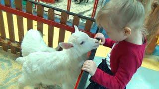 Алиса в детском зоопарке кормим животных и птиц  Alice in the children's zoo feed animals