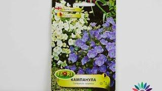 Цветя за Хриси - подарете симпатичните семена на ниска Кампанула