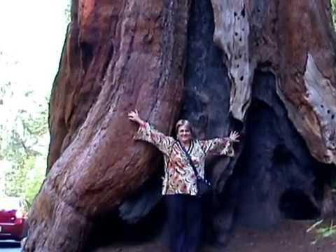 General Sherman Tree 09