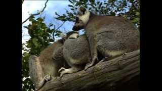 Ogród Zoologiczny w Opolu. Moja krótka relacja video. Wrzesień 2012 [BETACAM SP]
