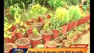 Kota | Housewife made a garden from the kitchen wastes