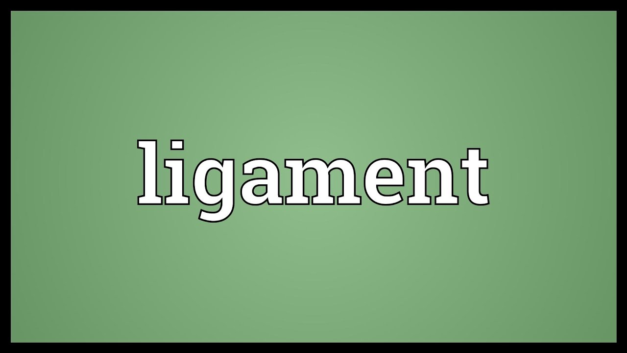 Ligament Meaning