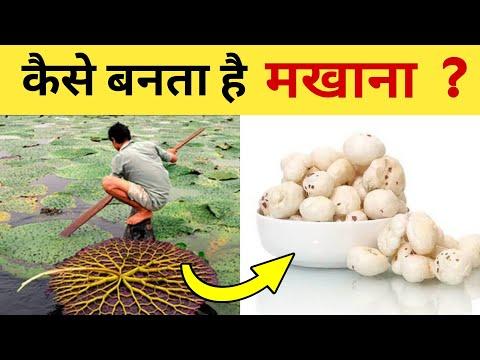 कैसे बनता है मखाना हिंदी में | Makhana (Fox Nut) Processing In Hindi