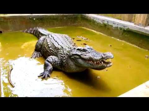 Nơi ở mới của cá sấu