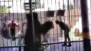 Egypt | The Lion of Judah Kills Trainer Islam Shaheen LIVE