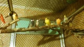 Птицы в большом вольере . Декоративные и дикие птицы .